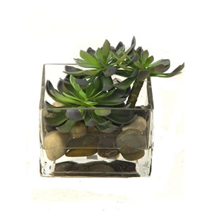 Succulents Faux Echeveria w/ Acrylic Water