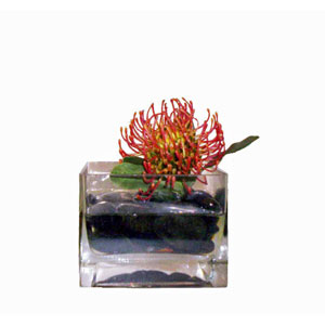 Accents Faux Protea in Acrylic Water