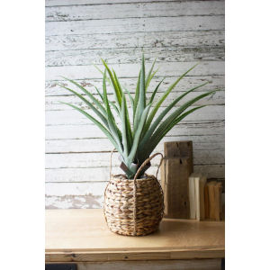 Green Artificial Aloe in Woven Pot