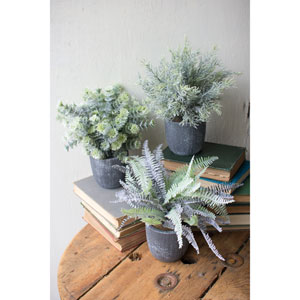 Fern Succulents with Round Grey Pots, Set of Three