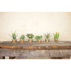 Artificial Succulents With Glass Container, Set of 6