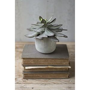 7-Inch Succulent With Cement Pot