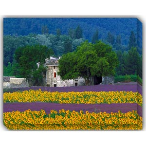Provence: 40 x 30 Outdoor Canvas Giclee