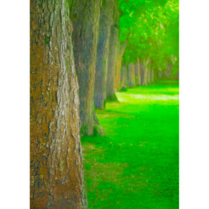 In The Park Along The Way (Color) by Hal Halli, 18 x 24 In. Canvas Art