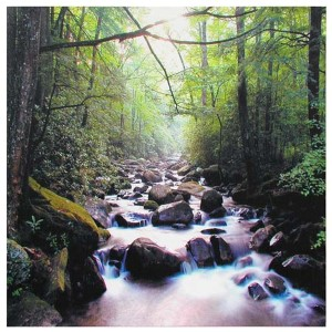 River of Life: 19.75 x 19.75 Canvas Wall Art