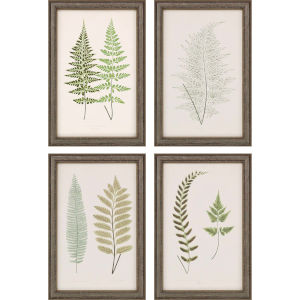 Fern Study I Green Framed Art, Set of Four
