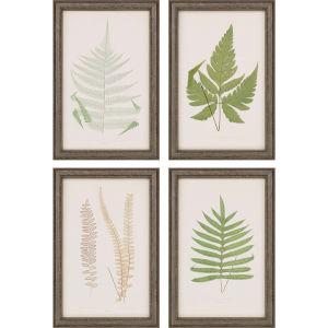 Fern Study II Green Framed Art, Set of Four