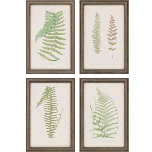 Fern Study III Green Framed Art, Set of Four