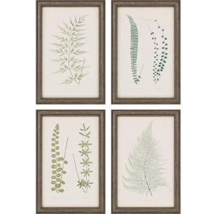 Fern Study IV Green Framed Art, Set of Four
