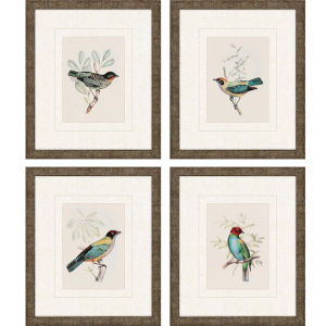 On Perch I Multicolor Framed Art, Set of Four