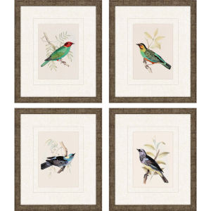 On Perch II Multicolor Framed Art, Set of Four