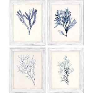 Seaweed Specimens Blue Framed Wall Art, Set of 4