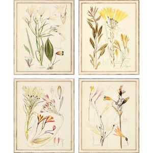 Antique Botanical Neutral Framed Wall Art, Set of 4
