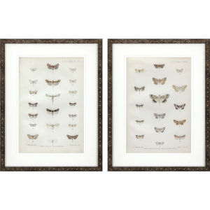 Lepidoptera Neutral Framed Wall Art, Set of 2