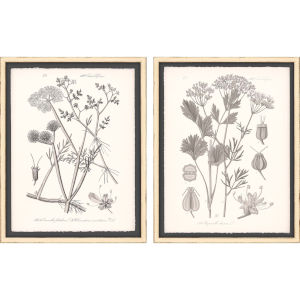 Grey Botanicals I Neutral Framed Wall Art, Set of 2