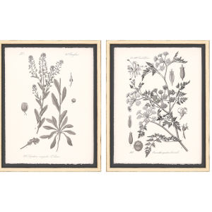 Grey Botanicals II Neutral Framed Wall Art, Set of 2