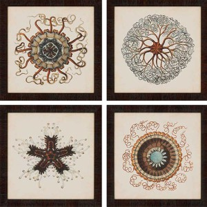 Gems of the Sea: 18 x 18 Framed Giclee Printed, Set of 4