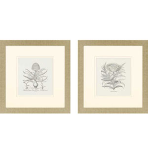 Hyacinthus/Cinera: 27 x 26 Framed Print, Set of Two