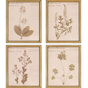 Botanicals by Shores: 22 x 18-Inch Framed Wall Art, Set of Four