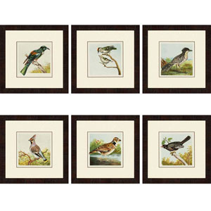Birds: 17 x 17-Inch Framed Wall Art, Set of Six