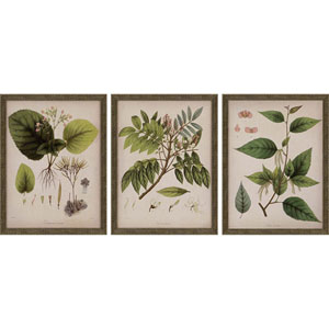 Plants I by Mendez: 17 H x 13 W-Inch Framed Art , Set of Three