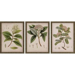 Plants II by Mendez: 17 H x 13 W-Inch Framed Art , Set of Three