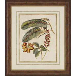 Foliage and Fruit IV by Vision Studio: 37 x 32-Inch Framed Wall Art