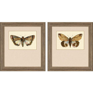 Beautiful Wings by Roberts: 32 x 30-Inch Framed Wall Art, Set of Two