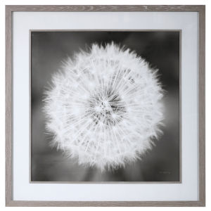 Dandelion Seedhead Black and White Seedhead Framed Print