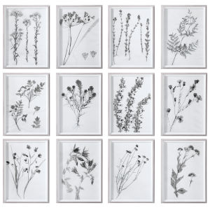 Contemporary Botanicals Black and White Framed Prints, Set of 12