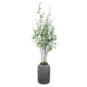 Aldis White and Natural Green Potted River Birch