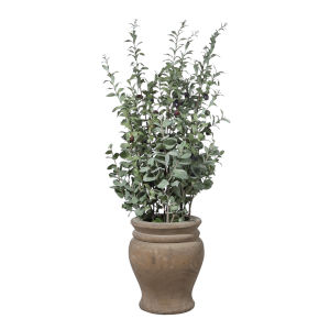 Tassos Natural Green Potted Lush Olive