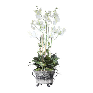 Neruda White Potted Orchid
