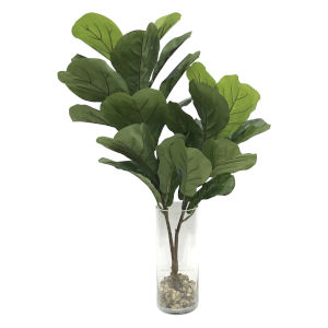 Urbana Natural Green Fiddle Leaf Fig Plant