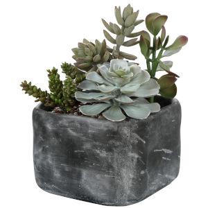 Alverio Charcoal Gray Dessert Garden Succulent