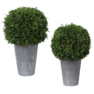 Cypress Globes Aged Dark Gray Trees-Greenery, Set of 2