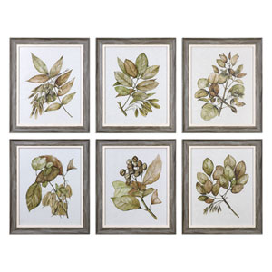 Seedlings Framed Prints, Set of 6