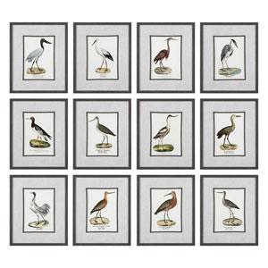 Seashore Birds Prints, Set of Twelve