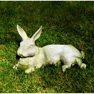 White Moss Field Rabbit