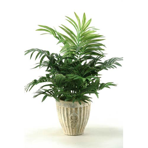 Parlor Palm in Ceramic Planter