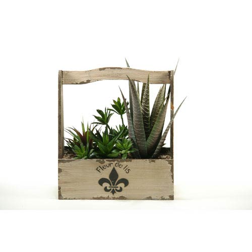 D W Silks Mixed Agave Succulents And Echeveria In Rectangle Fleur