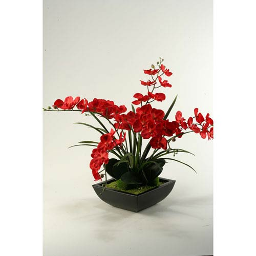 Deep Red Phael Orchids in Square Metal Planter