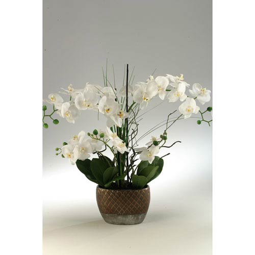 Cream Orchids in Oval Ceramic Planter