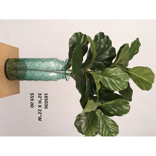 D & W Silks Fiddle Leaf Fig Branches in Blue Glass Vase