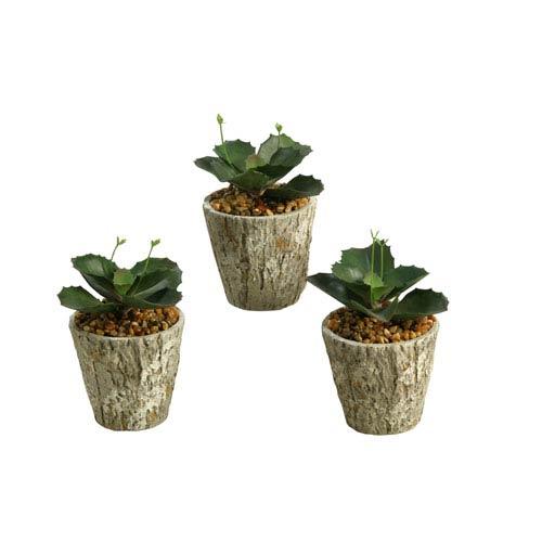 Wild Succulent in Cement Planter, Set of Three