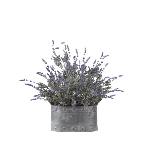 Lavender in Oval Metal Planter