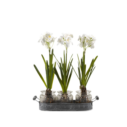 Paperwhite Bulbs in Glass Jars Set on Oval Metal Tray