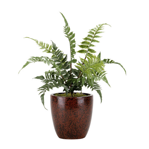 Small Leather Fern in Round Ceramic Planter