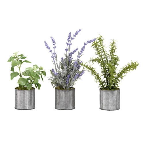 Basil, Lavender and Springeri in Tin Planters, Set of Three