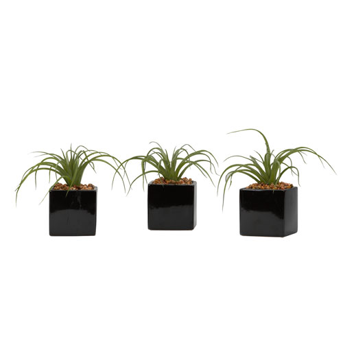 D & W Silks Curly Tilandsia in Black Ceramic Cube, Set of Three